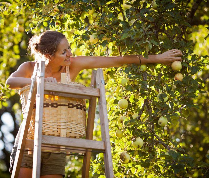 Садовые лестницы стремянки своими руками